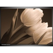 Glas schilderij Tulpen | Sepia, Bruin