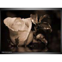Glas schilderij Roos   Sepia, Bruin