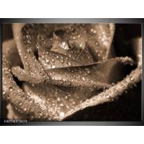 Glas schilderij Roos | Sepia