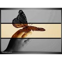 Glas schilderij Vlinder   Sepia, Bruin