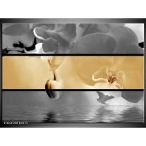 Glas schilderij Orchidee | Sepia, Grijs
