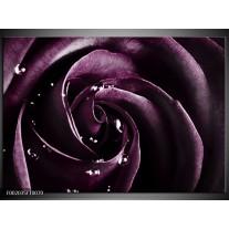 Foto canvas schilderij Roos | Paars, Zwart