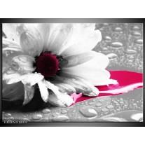 Glas schilderij Bloem | Grijs, Wit, Roze