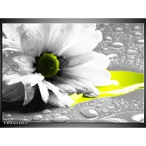 Glas schilderij Bloem | Grijs, Wit, Geel