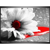 Glas schilderij Bloem | Grijs, Wit, Rood