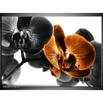 Glas schilderij Orchidee | Zwart, Wit, Oranje