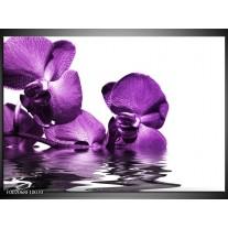 Foto canvas schilderij Orchidee | Paars, Wit