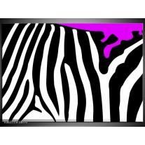Foto canvas schilderij Zebra   Paars, Zwart, Wit