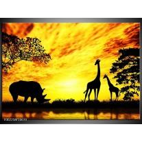 Glas schilderij Natuur | Geel, Zwart, Bruin