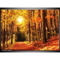Glas schilderij Herfst | Geel, Oranje, Bruin