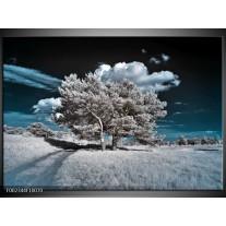 Foto canvas schilderij Boom | Grijs, Blauw, Wit