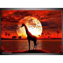 Glas schilderij Dieren | Rood, Wit, Zwart
