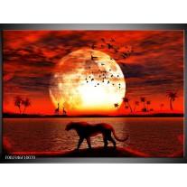 Glas schilderij Dieren | Rood, Zwart, Oranje
