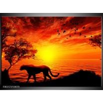 Glas schilderij Natuur | Oranje, Zwart, Rood