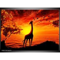 Glas schilderij Dieren | Geel, Oranje, Zwart