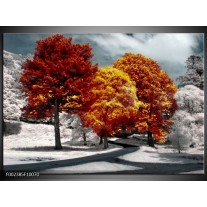 Glas schilderij Natuur   Geel, Oranje, Wit