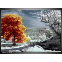 Foto canvas schilderij Natuur | Oranje, Wit, Grijs