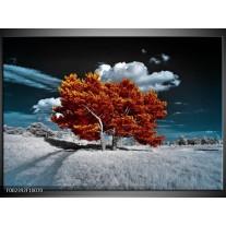 Foto canvas schilderij Natuur | Bruin, Wit, Grijs