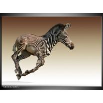 Glas schilderij Zebra | Zwart, Wit, Bruin