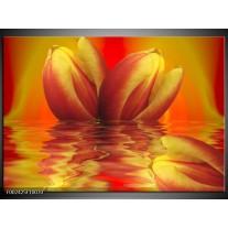Glas schilderij Tulp | Geel, Rood