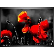 Glas schilderij Klaproos | Zwart, Rood, Wit