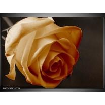 Glas schilderij Roos | Geel, Wit, Zwart