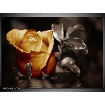Foto canvas schilderij Roos | Geel, Wit, Grijs