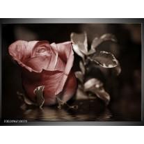 Glas schilderij Roos | Bruin, Wit, Grijs