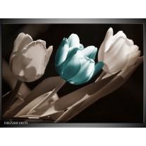 Foto canvas schilderij Tulp   Blauw, Grijs, Wit