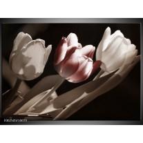 Foto canvas schilderij Tulp | Bruin, Grijs, Wit