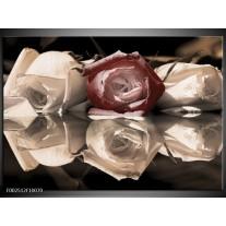 Glas schilderij Roos | Bruin, Grijs, Wit