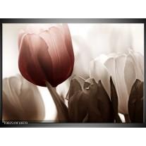 Glas schilderij Tulpen | Bruin, Wit, Grijs