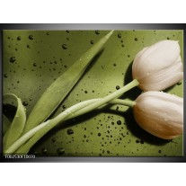 Glas schilderij Tulp | Groen, Bruin