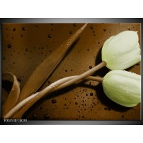 Foto canvas schilderij Tulp | Bruin, Groen