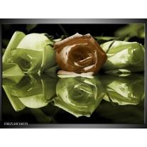 Glas schilderij Roos | Groen, Bruin, Wit