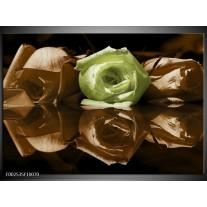Glas schilderij Roos | Groen, Bruin