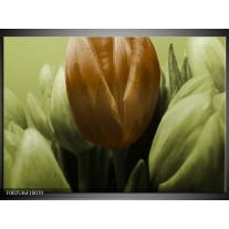 Glas schilderij Tulp | Bruin, Groen