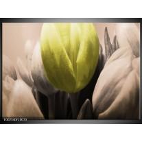 Foto canvas schilderij Tulp | Groen, Grijs, Zwart