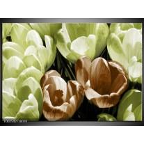 Glas schilderij Krokus | Groen, Bruin, Wit