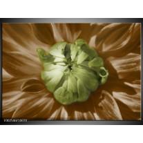 Foto canvas schilderij Bloem | Groen, Bruin, Wit