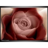 Glas schilderij Roos | Bruin, Wit, Zwart