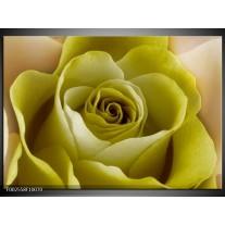Glas schilderij Roos   Groen, Wit, Zwart