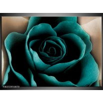 Glas schilderij Roos | Blauw, Wit, Zwart