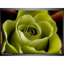 Glas schilderij Roos | Groen, Wit, Zwart