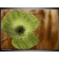 Glas schilderij Klaproos | Bruin, Groen, Zwart