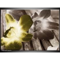 Foto canvas schilderij Bloem | Groen, Grijs, Wit