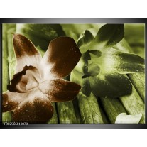 Glas schilderij Bloem | Groen, Bruin, Wit