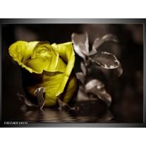 Glas schilderij Bloem   Groen, Grijs, Zwart