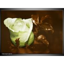 Foto canvas schilderij Bloem | Wit, Bruin, Groen