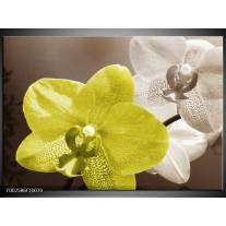 Glas schilderij Orchidee | Wit, Groen, Grijs